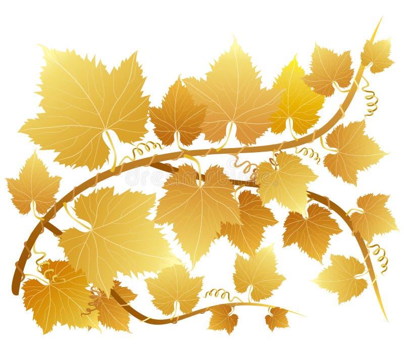 Fogli dorati dell'uva illustrazione vettoriale