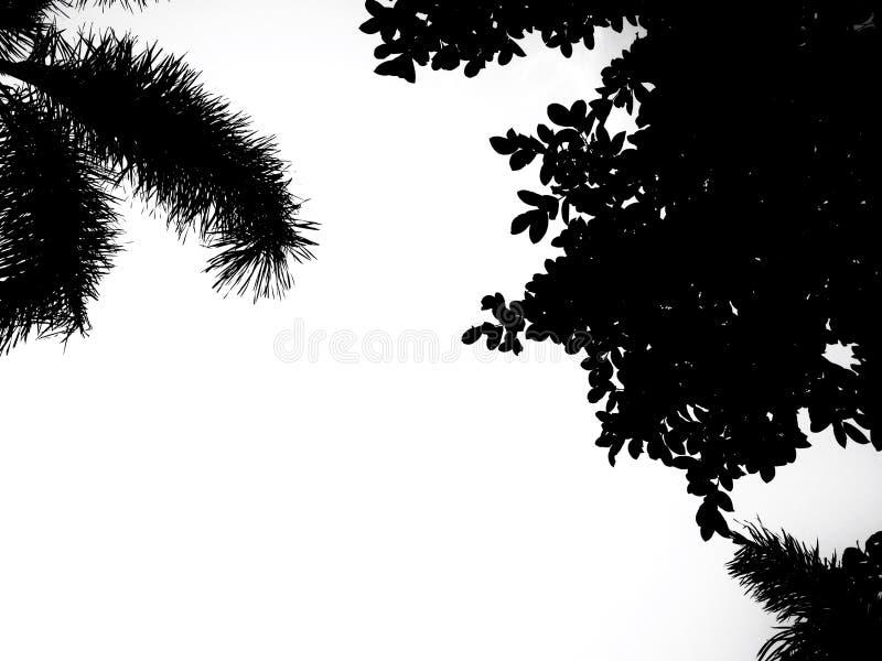 Fogli e cielo dell'albero illustrazione vettoriale