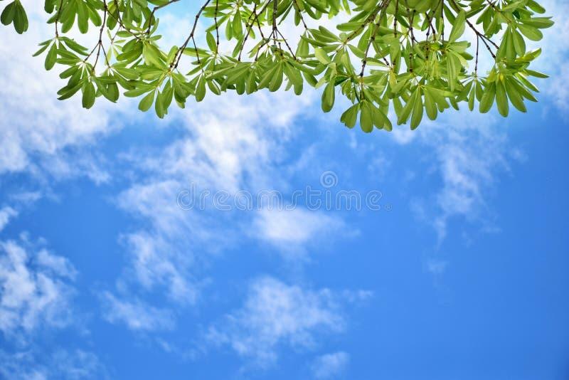 Fogli e cielo di verde fotografia stock libera da diritti