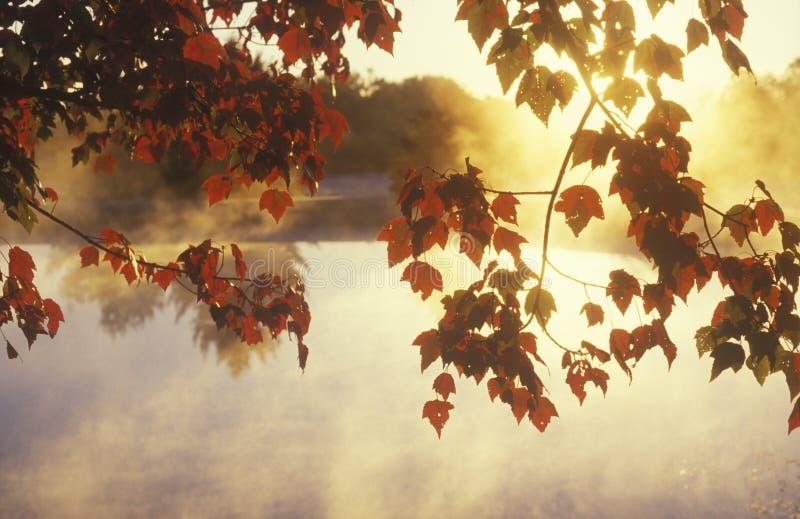 Fogli e foschia di autunno, immagine stock