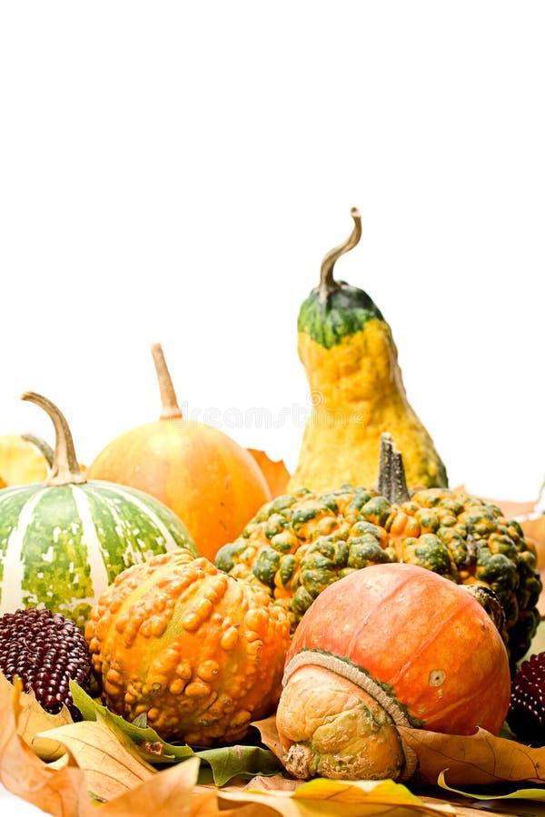 Fogli e verdure della frutta fotografia stock libera da diritti