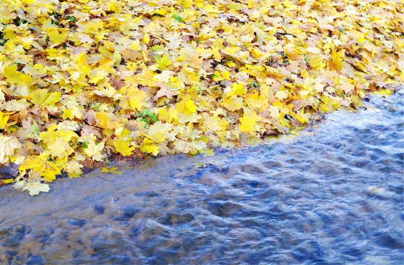 Fogli ed acqua. immagine stock