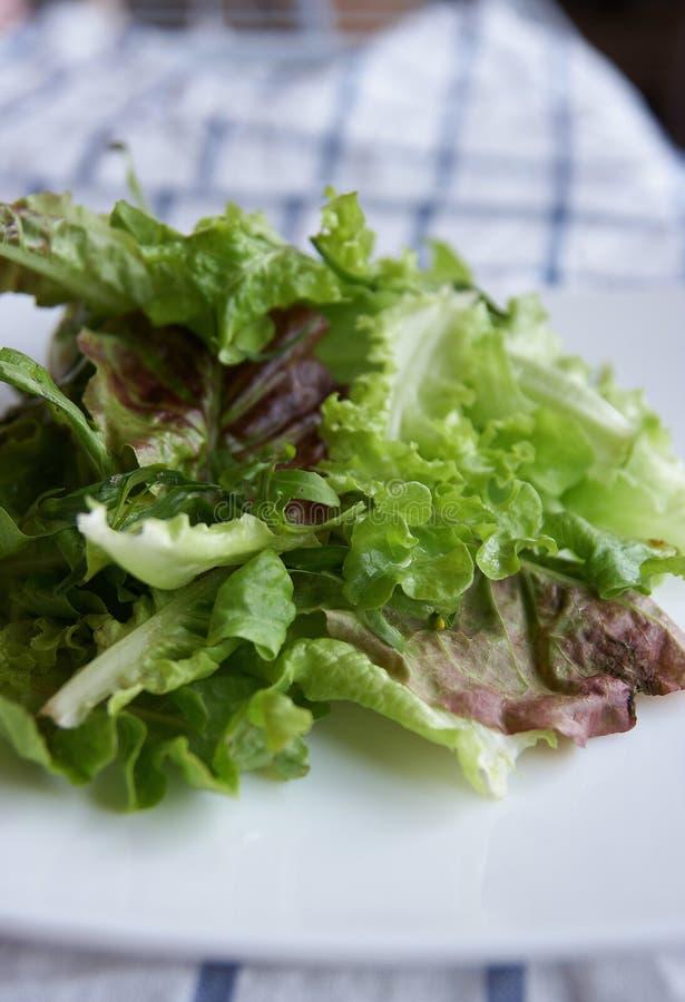 Fogli freschi dell'insalata verde fotografia stock