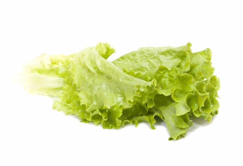 Fogli freschi di insalata verde fotografia stock libera da diritti