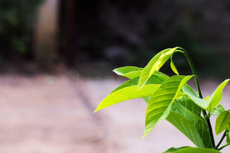 Fogli freschi e verdi immagini stock