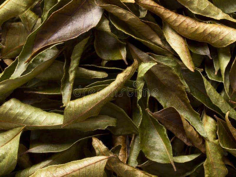 Fogli indiani secchi del curry fotografie stock libere da diritti