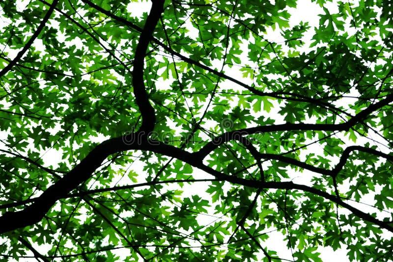 Fogli sull'albero immagine stock libera da diritti