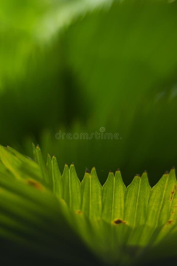 Fogli tropicali immagini stock libere da diritti