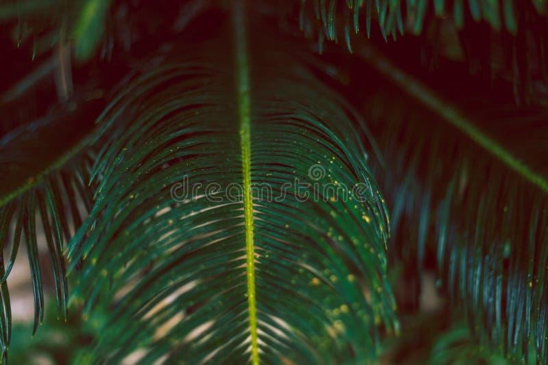 Fogli tropicali della palma Macro concetto tropicale verde fotografia stock libera da diritti