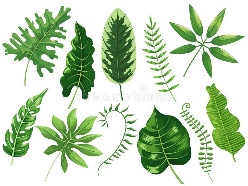 Fogli tropicali La foglia tropicale esotica, la foresta pluviale botanica ed il viaggio dei tropici copre di foglie vettore del f royalty illustrazione gratis