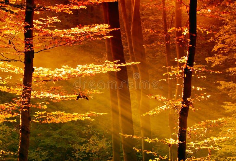 Fogli variopinti nella foresta con il raggio di sole immagine stock