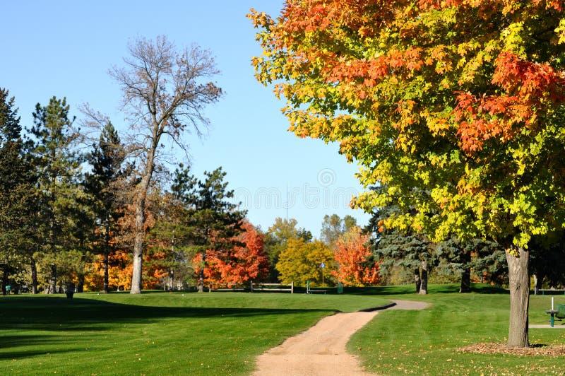 Fogli variopinti sugli alberi di acero fotografie stock libere da diritti