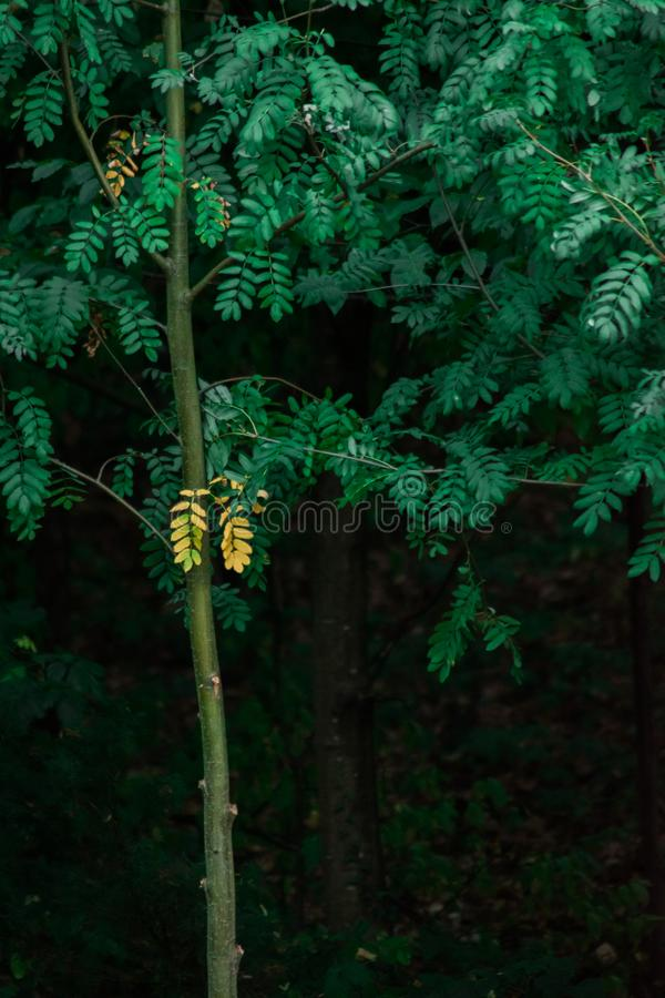 Fogli verdi immagine stock