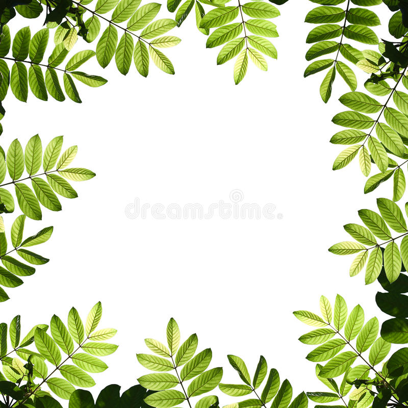 Fogli verdi fotografie stock libere da diritti
