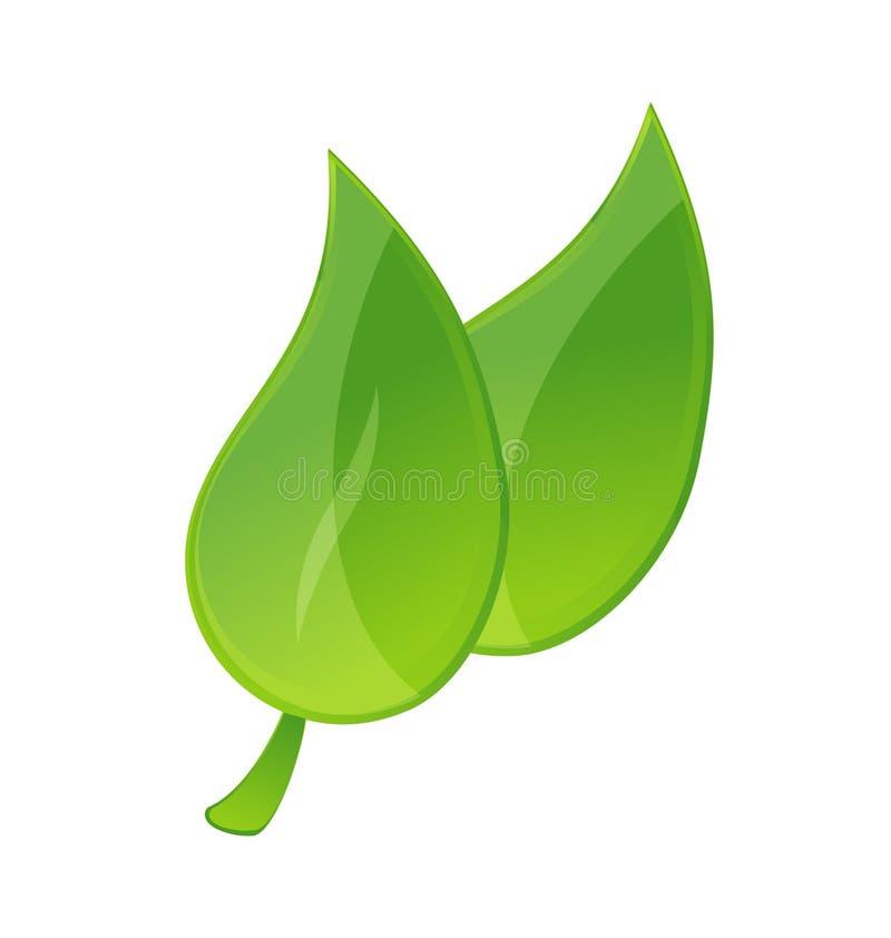 Fogli verdi illustrazione di stock