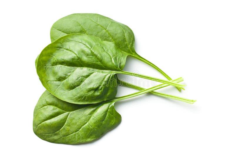 Fogli verdi degli spinaci immagine stock libera da diritti
