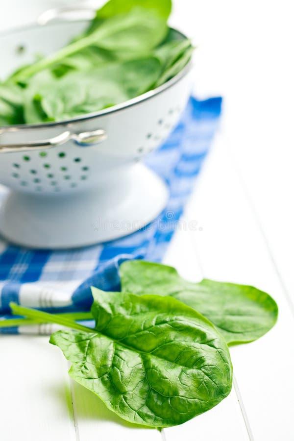 Fogli verdi degli spinaci fotografia stock libera da diritti