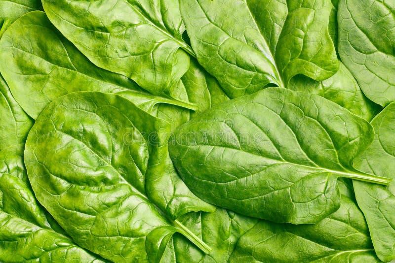 Fogli verdi degli spinaci immagini stock libere da diritti