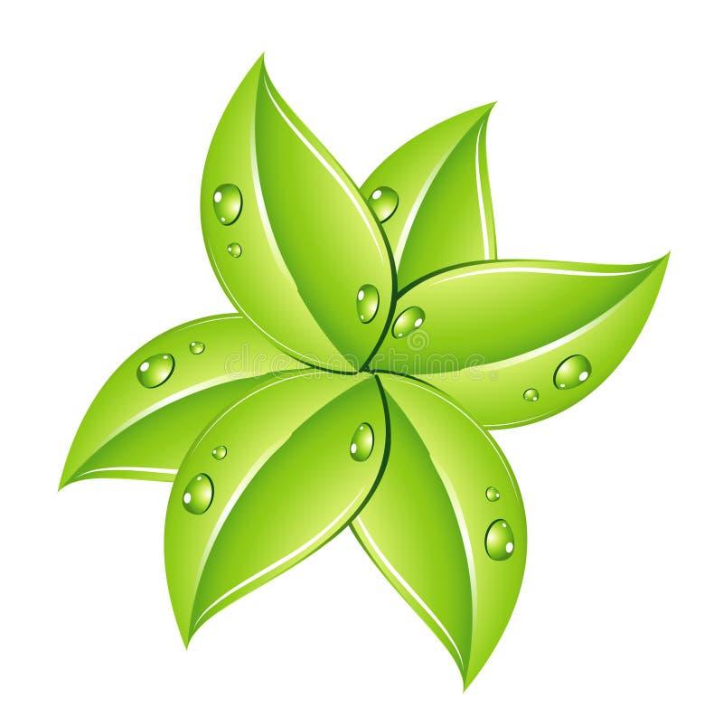 Fogli verdi e gocce illustrazione di stock