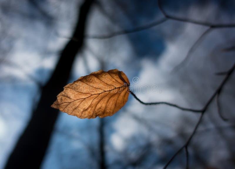 Foglia asciutta di autunno nel vento fotografie stock