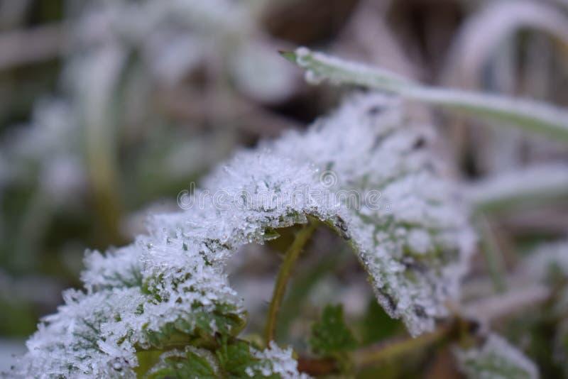 Foglia con gelo appuntito fotografia stock