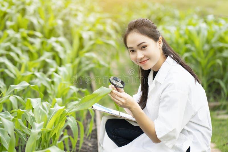 Foglia d'esame della pianta dell'ingegnere asiatico della donna di biotecnologia fotografie stock libere da diritti