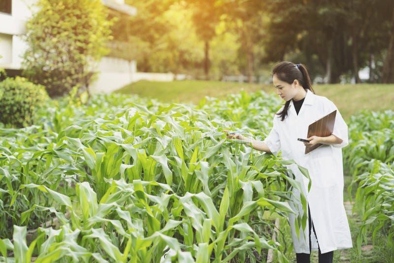 Foglia d'esame della pianta dell'ingegnere della donna di biotecnologia per la malattia fotografie stock