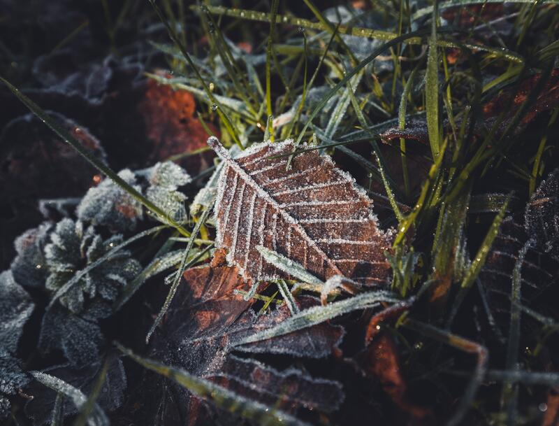 Foglia d'inverno congelata dal gelo mattutino fotografia stock