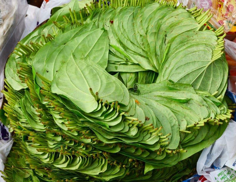 Foglia del betel fotografie stock