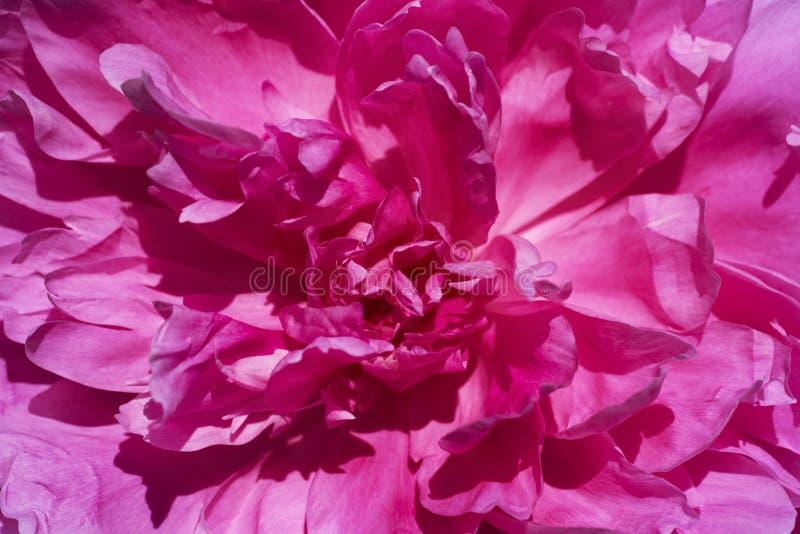 Foglia del fiore del papavero fotografie stock