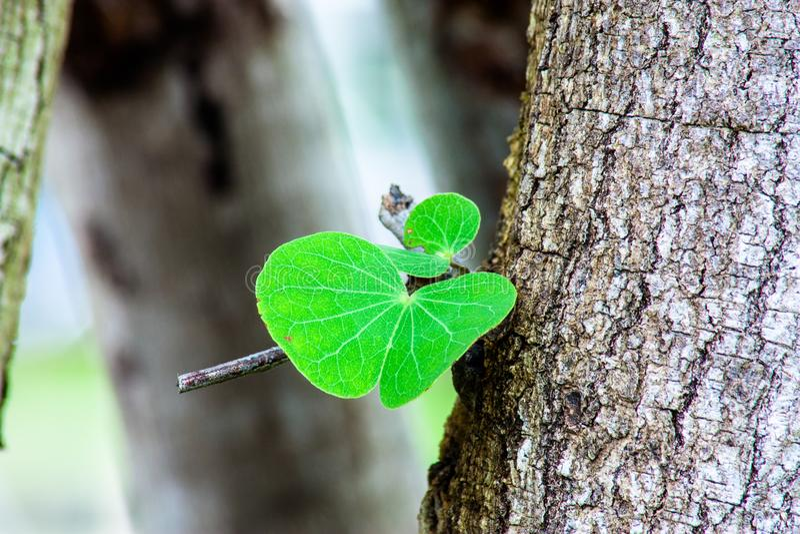 Foglia dell'albero dal vecchio albero immagini stock libere da diritti