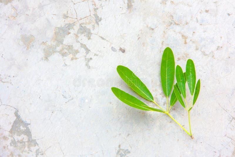 foglia dell'albero su terra fotografie stock libere da diritti