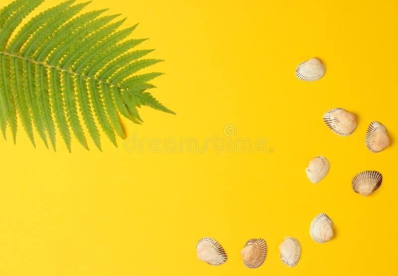 Foglia della felce, conchiglia su fondo pastello giallo Il concetto del viaggio, turismo, stazione balneare summertime Vista supe immagine stock libera da diritti