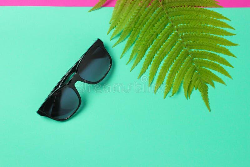 Foglia della felce, occhiali da sole su fondo pastello blu Il concetto del viaggio, turismo, stazione balneare summertime Vista s fotografia stock libera da diritti
