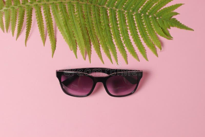 Foglia della felce, occhiali da sole su fondo pastello rosa Il concetto del viaggio, turismo, stazione balneare summertime Vista  immagine stock libera da diritti