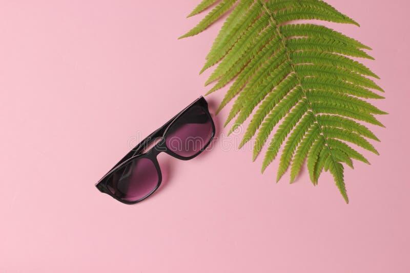 Foglia della felce, occhiali da sole su fondo pastello rosa Il concetto del viaggio, turismo, stazione balneare summertime Vista  fotografia stock libera da diritti