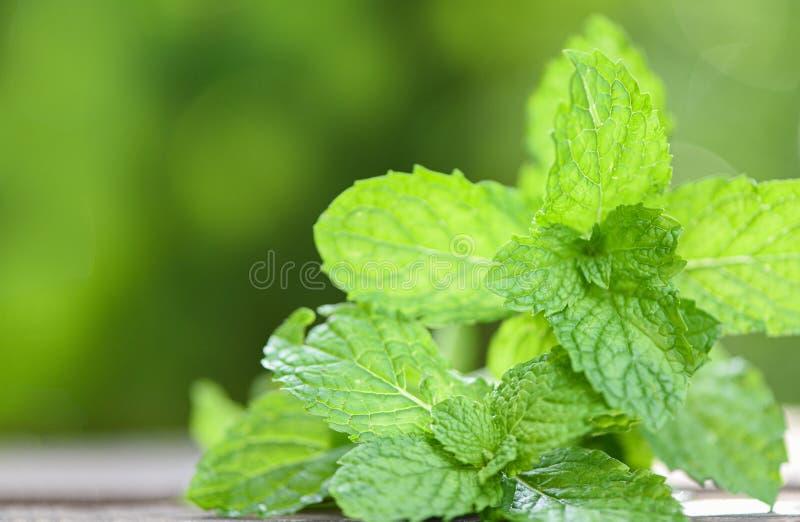 Foglia della menta piperita - foglie di menta fresca in un piatto su un fondo di legno di verde della natura fotografie stock