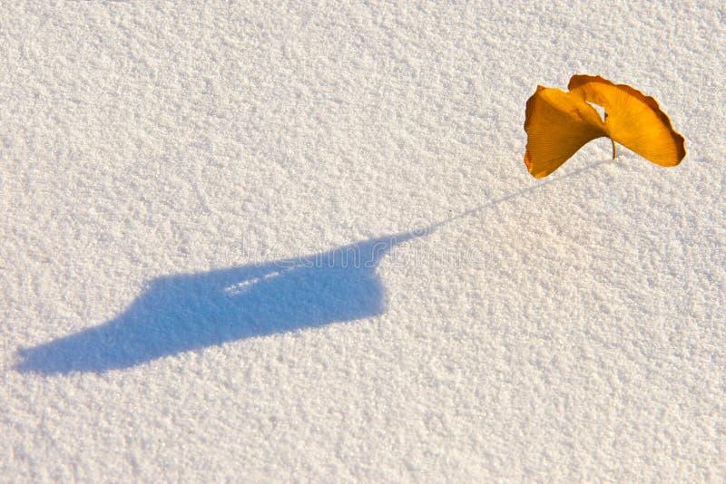 Foglia della neve fotografie stock libere da diritti