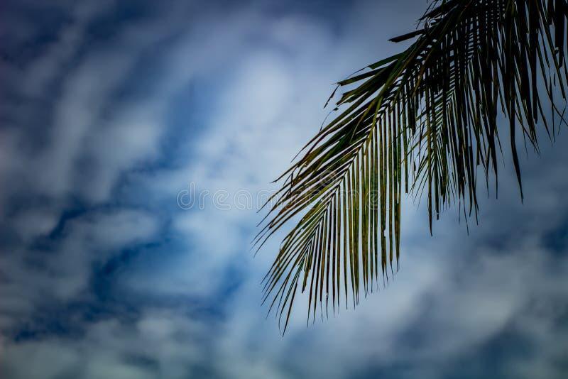 Foglia della noce di cocco e carta da parati del cielo immagini stock