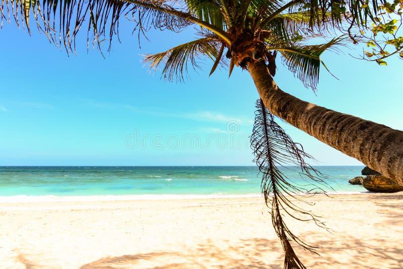 Foglia della palma, oscillazione su una spiaggia immagine stock