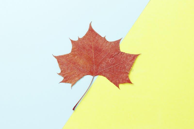 Foglia di acero arancio su fondo giallo e blu, fine su Priorit? bassa di autunno fotografia stock