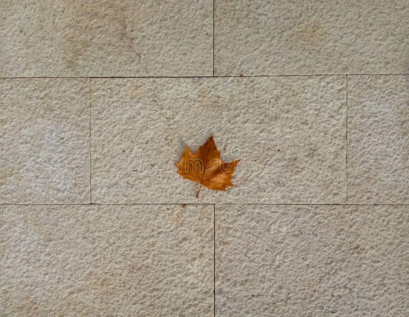 Foglia di acero gialla sui precedenti delle lastre per pavimentazione fotografie stock libere da diritti