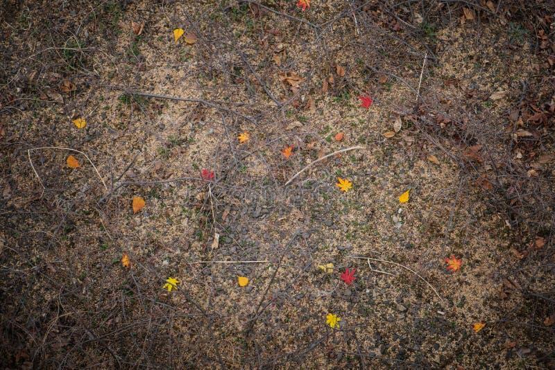 Foglia di acero rossa sulla terra fotografie stock
