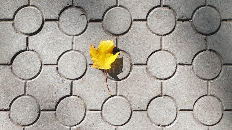 Foglia di acero sola sulle mattonelle a terra con il modello geometrico dei cerchi immagine stock