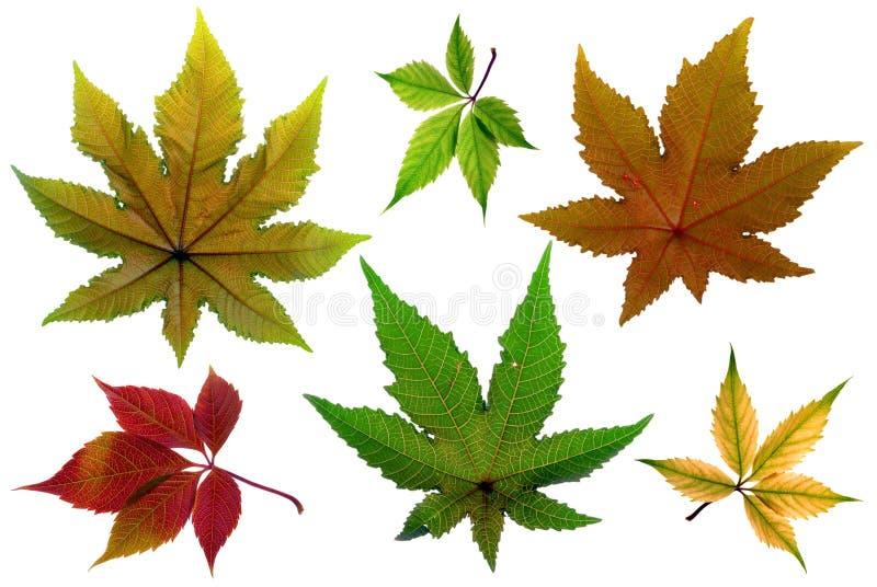 Foglia di autunno immagine stock