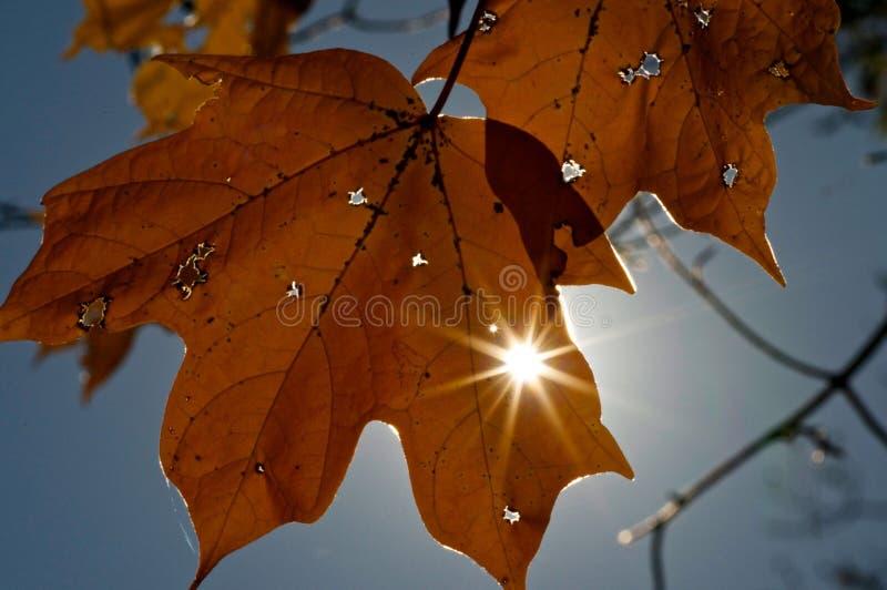 Foglia di autunno con sunstar fotografia stock libera da diritti