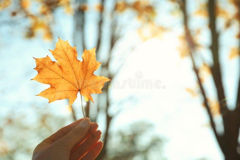Foglia di autunno della tenuta della donna contro luce solare immagini stock libere da diritti