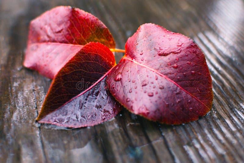 Foglia di autunno sotto la pioggia 17 fotografia stock