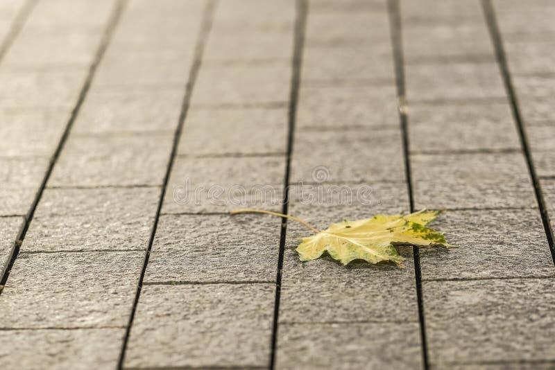 foglia di autunno su un marciapiede fotografie stock libere da diritti