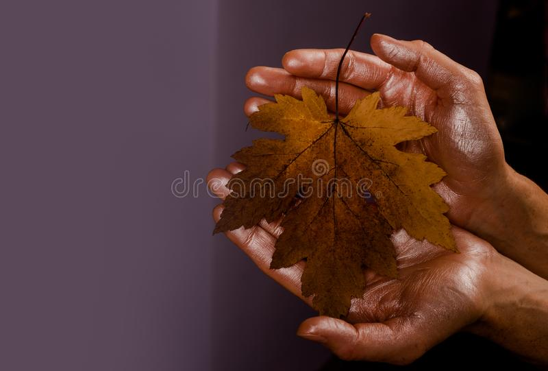 Foglia di autunno sulle mani Ciao sogni di caduta della foglia e di autunno Vendita di autunno per venerd? nero Copi lo spazio immagini stock